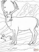 Coloring Colorare Disegni Deer Cervi Cervo Mule Deers Famiglia Mulo Disegno Supercoloring Immagini Muli Super Creare Moose Mulets Cerfs Printable sketch template