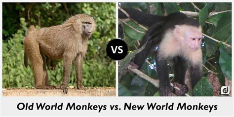 Difference Between Old World Monkeys And New World Monkeys