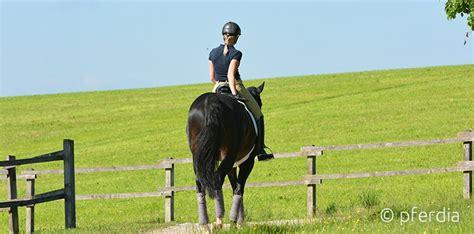 muskelaufbau beim pferd sei fit fuer den saisonstart