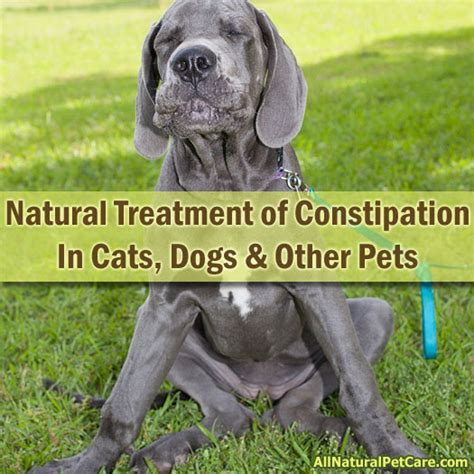 natural treatment  constipation  cats dogs   pets