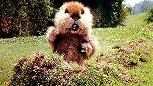 What Do These M... Caddyshack Gopher