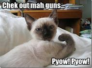 Cute Funny Animals with Guns