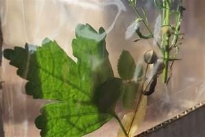 Blumen In Der Box : sonnenlicht box blumen pressen und betrachten ~ Orissabook.com Haus und Dekorationen
