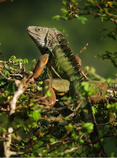 Exotic Pets Popular Wild Released Likely Research