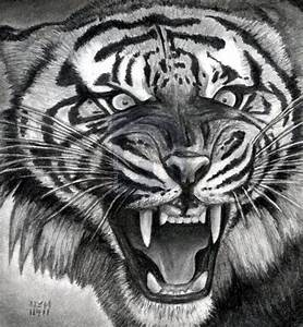 How To Draw A Roaring Tiger  Step By Step  Drawing Guide