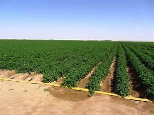 Drip Irrigation - The WhiteTading BV