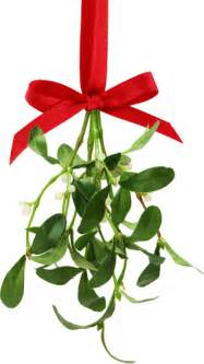 small white flowers altogether christmas traditions the history of mistletoe