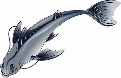Fish Pescado Draw Drawings Clipart