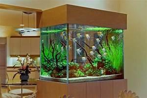 Deco Aquarium Maison