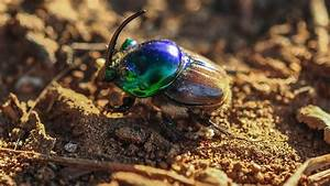 Can U2019t Find That Rare Leopard Anywhere  Ask A Dung Beetle