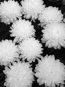FLOWERS | via Tumblr - image #2213501 by KSENIA_L on Favim.com