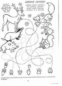 Download Als PDF Natur Wald Tiere Sachunterricht