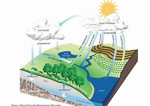 Greening Your Landscape   Managing Stormwater