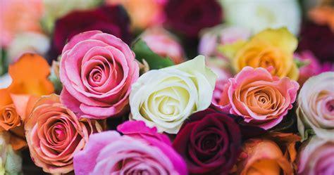 コンプリート! 薔薇 花束 壁紙 322758