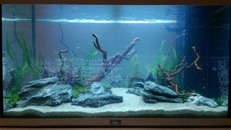 photos d aquarium page 425