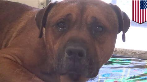 dog crying video  viral    sad dog stories