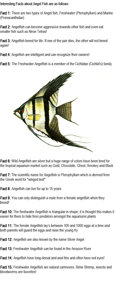 angelfish facts for childhood education 915 | Angelfish facts for kids