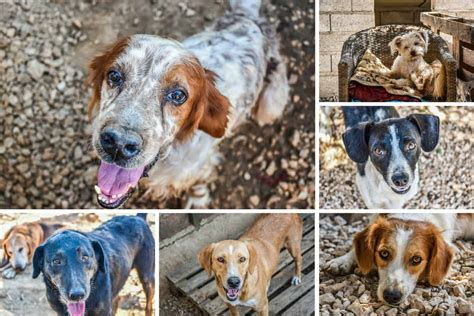 ark animal rescue kefalonia hope   stray dogs cats