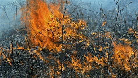 prevent forest fires sciencing