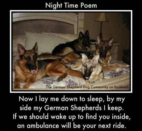 Ambulance In German Meme - night time poem so not delilah but cute pets pinterest bedtime stories ambulance and