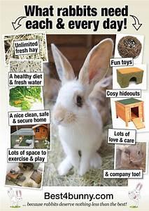Best 20+ Rabbit Hutches ideas on Pinterest