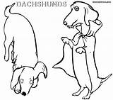 Dachshund Coloring Pages Printable Dog Frise Bichon Wiener Colorings Dogs Coloringway Getcolorings Puppy Rescue Getdrawings sketch template