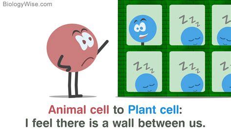 plant cell cartoon pic foxytoonco