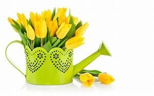 Tulpen Im Topf In Der Wohnung : die tulpe bringt frische mit sie symbolisiert den fr hling ~ Buech-reservation.com Haus und Dekorationen