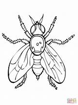 Fly Coloring Fruit Firefly Drawing Mosca Colorear Coloriage Printable Mouches Lightning Fruchtfliege Bug Disegni Ausmalbilder Supercoloring Colorare Dibujos Coloriages Fruta sketch template