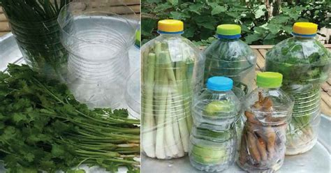 วิธีถนอมผักให้สดใหม่เสมอ ทดลองแล้วได้ผลจริง