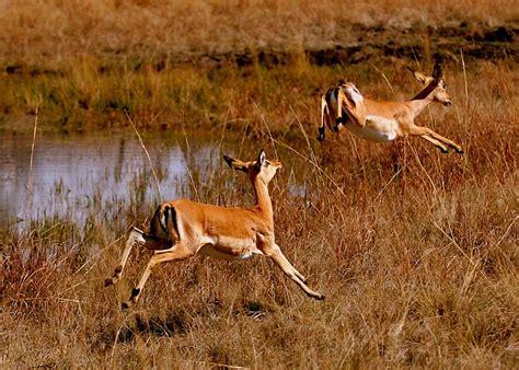 animals safaris wildlife  africa poaching endangered