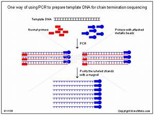 Dna powerpoint template for mac image collections for How much template dna for pcr