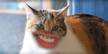county cat cats with human mouths huffpost uk