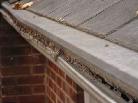 Gutter Protection Home Improvement Ideas