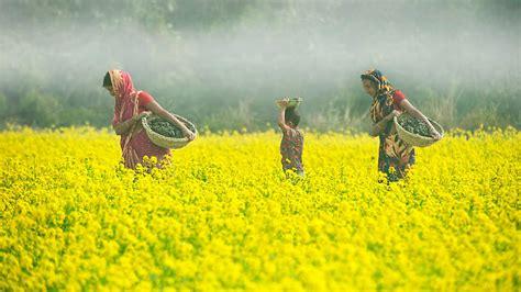 spice merchant diary mustard seed sbs food
