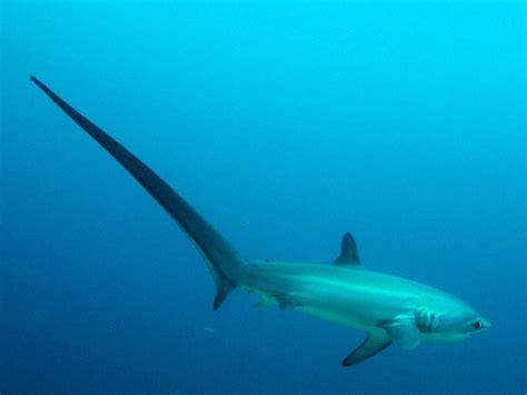 weird sharks    idea existed