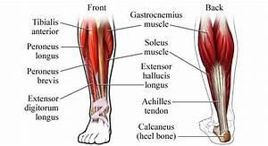 Leg Training 101  The Complete Legs Workout  U2013 Fitness Volt