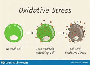 Oxidative Cartoons  Illustrations  U0026 Vector Stock Images
