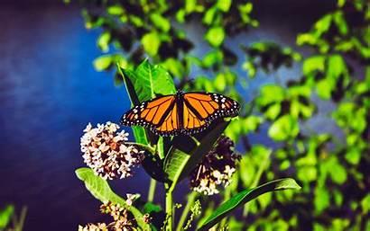 Butterfly Monarch Bright Close Patterns 4k Ultra