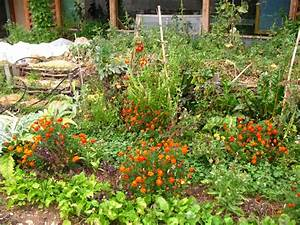 Plantes Amies Et Ennemies Au Potager : za tita bilja u organskoj proizvodnji ~ Melissatoandfro.com Idées de Décoration