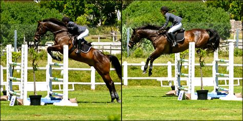 jumping horse jump jumps really very these