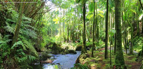 hawaii tropical botanical garden succulents and more hawaii hawaii tropical botanical garden