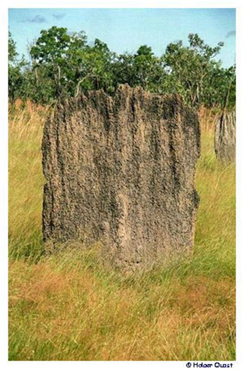 Nord West Ausrichtung Sonne by Litchfield National Park Termitenh 252 Gel Magnetic