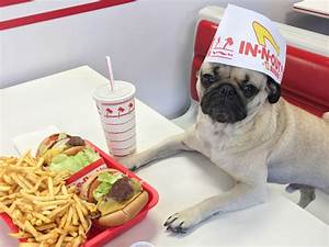 The Internet U2019s Biggest Food Influencer May Just Be A Pug