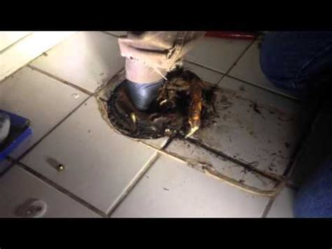 toilet is stopped up stopped up toilet root roots in plumbing pipe