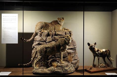 trophy room peter flack hunter writer conservationist