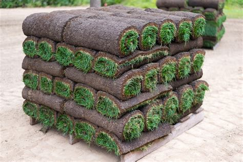 when is the best time to lay sod when is the best time to lay sod a green hand