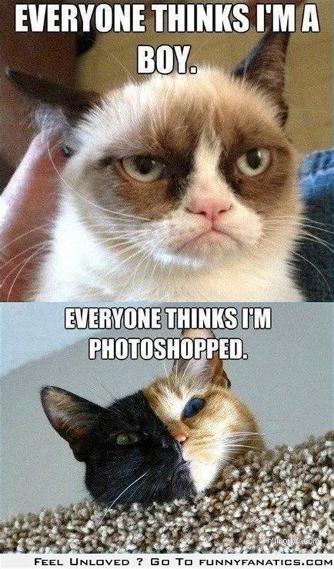 Cat Problems Meme - cat problems grumpy cat and mr half and half half half is a conjoined twin cat stile and