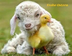 Frohe Ostern Bilder Kostenlos Herunterladen : christliche bilder kostenlos downloaden frohe ostern ~ Frokenaadalensverden.com Haus und Dekorationen