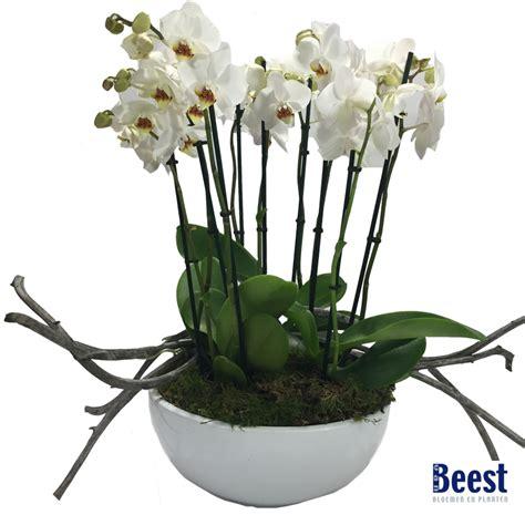 van beest bloemen en planten amersfoort bloemen planten van beest vathorst bloemisten